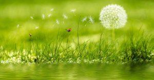 meadow-2225250_1280