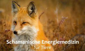 Schamanische Energiemedizin für Tiere